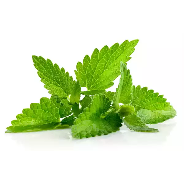 Mint Leaves (Pudina Pata)- 100 gm