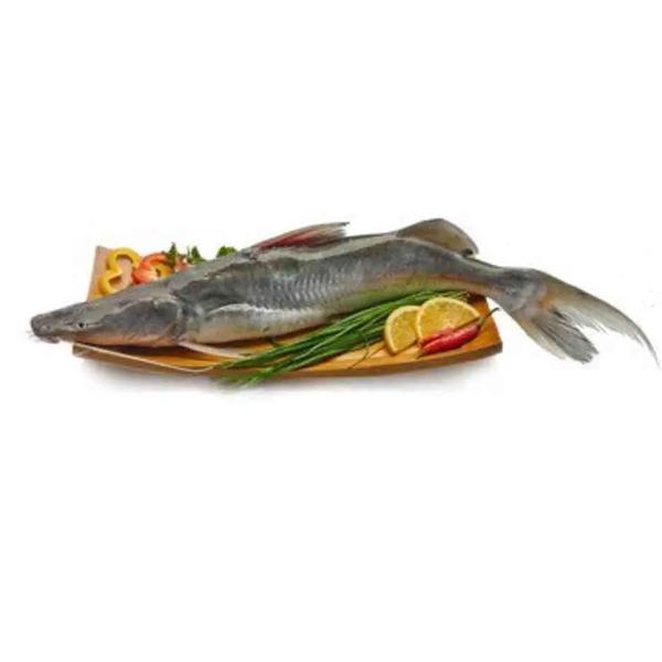 Ayer Fish (Size: Standard) (per KG)