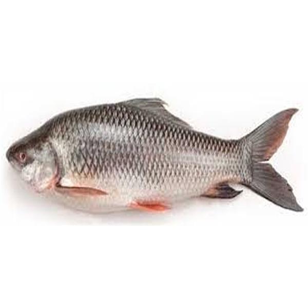 Rui Fish- Size: 4 kg+ (per KG )