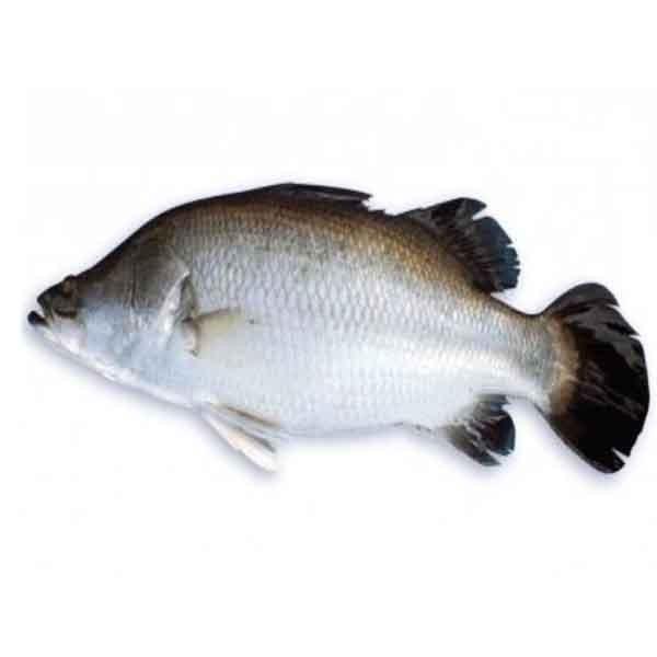 Koral Fish  (1 Kg )
