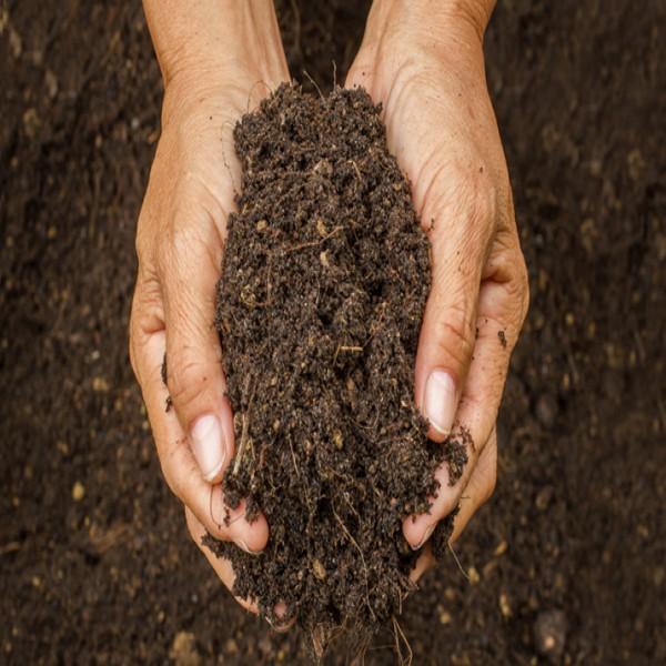 Organic Soil (1 Bag)